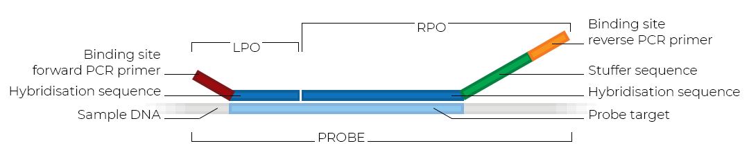 Schematic of an MLPA probe.
